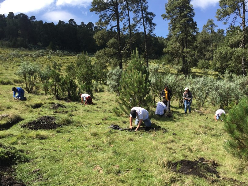 Cubic 33  México reforestó media hectárea en el Nevado de Toluca